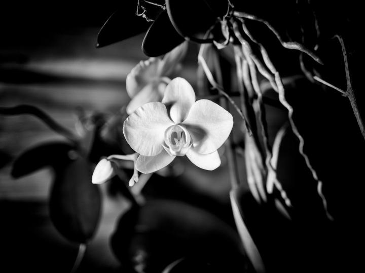 orkidea_small